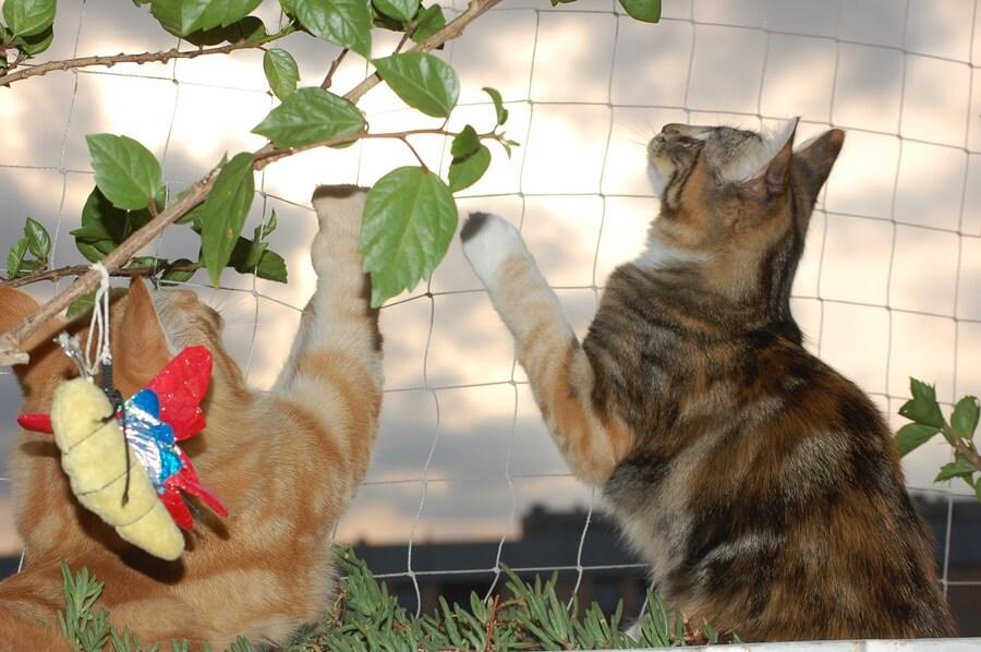 caídas de gatos como evitarlas