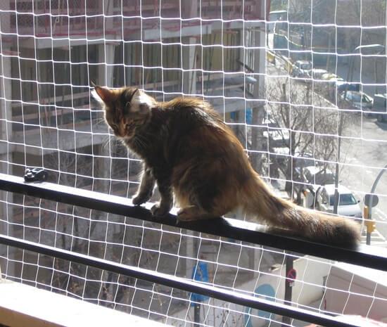 Red de seguridad para gatos