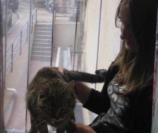 malla proteccion barandilla gatos