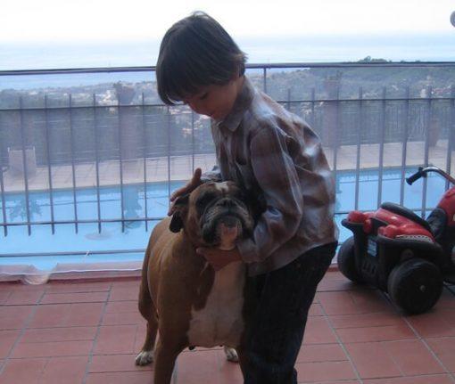 proteccion barandilla niños animales