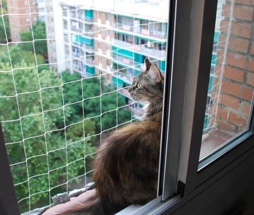 proteger ventanas gatos