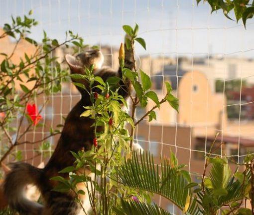 red seguridad gatos transparente