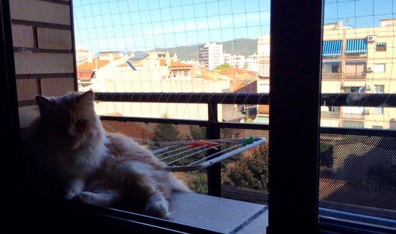 Protección para Gatos en Mollet del Vallés