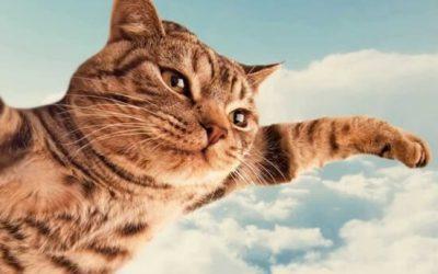 El Gato Paracaidista