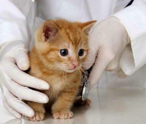 proteger a tu gato de las caídas