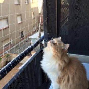 protección para gatos con red transparente