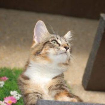 proteger gatos de las caídas