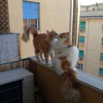 red de seguridad para el gato paracaidista