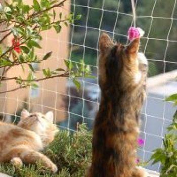 seguridad gatos
